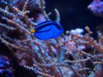 Meerwasser Aquaristik